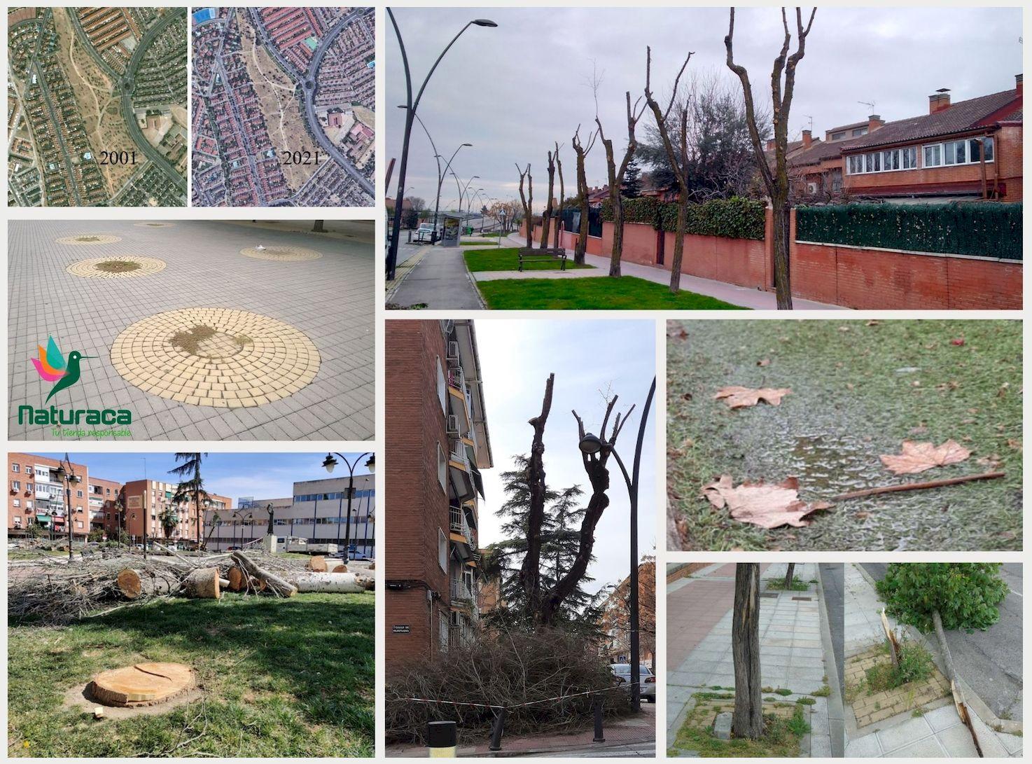 Naturaca se adhiere al proyecto 'La Mesa del Árbol de Getafe'